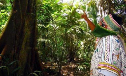 Perú. Nueva constitución, los derechos de la madre naturaleza y la Amazonía