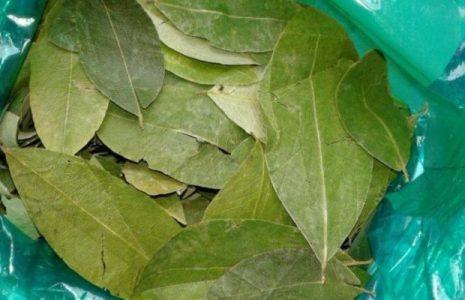 Bolivia. Reivindica valor tradicional de la hoja de coca