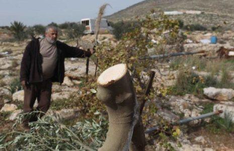 Israel. Destruye una reserva natural arrancando 10.000 árboles