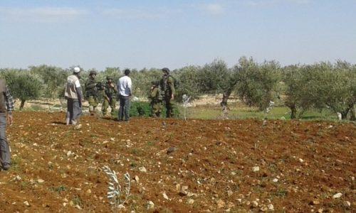 """Palestina. Palestinos que plantaban olivos atacados por el """"ejército israelí"""""""
