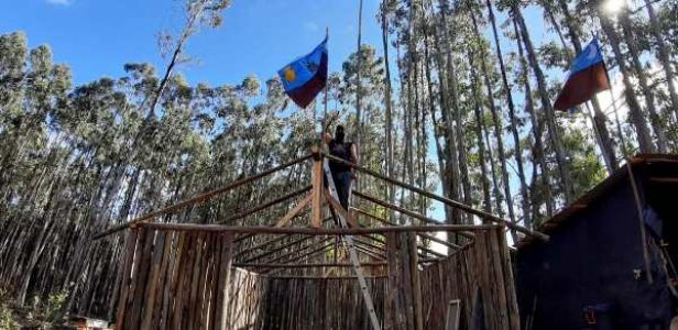Nación Mapuche. Lof Pilpilkawin en recuperación