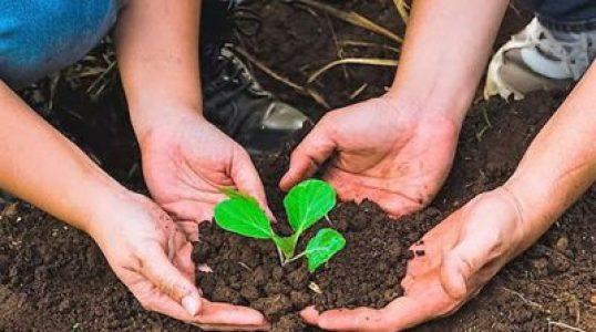 Cuba. 26 organizaciones ambientalistas y agroecológicas piden a Biden fin de sanciones