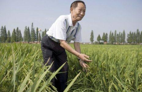 China. Despedida masiva a Yuan Longping, el «padre del arroz híbrido»