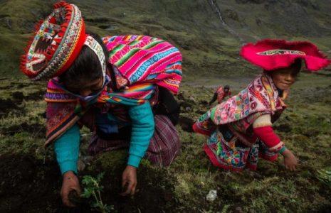 Ecología social. Comunidades andinas están reforestando los bosques más altos del mundo
