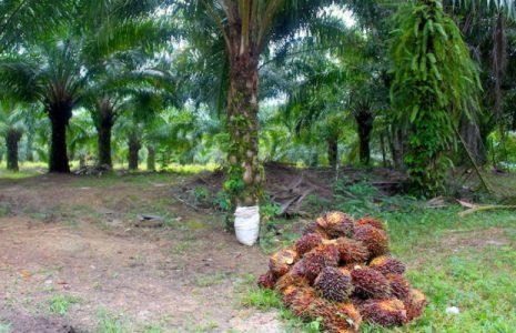 México. Empresas internacionales se han apoderado de más de 36.000 hectáreas de tierra en Chiapas