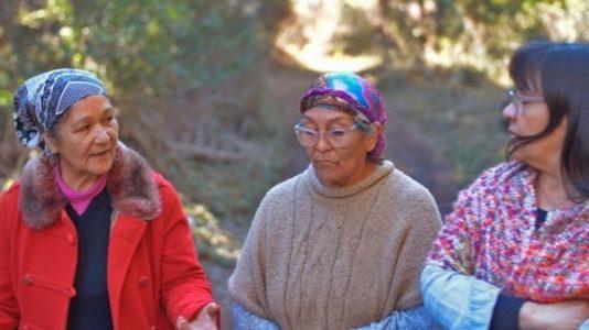Nación Mapuche. Comunicado de las comunidades Millalonko Ranquehue, Celestino Quijada y Tambo Báez