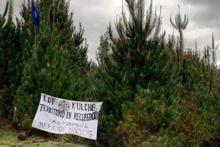 Nación Mapuche. Lof Külche Mapu, trabajos de recuperación y control territorial en predio Pedro de Valdivia