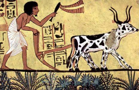 Ecología Social. La Cumbre sobre los Sistemas Alimentarios y algunos contextos de interés