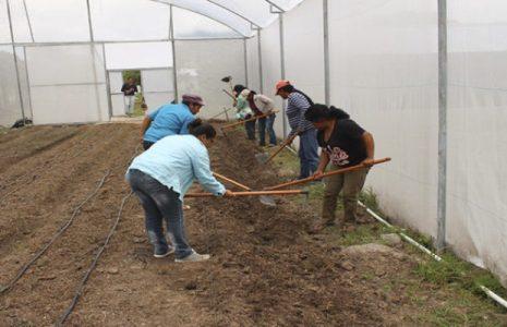 Honduras. La pobreza impacta directamente en la mujer rural