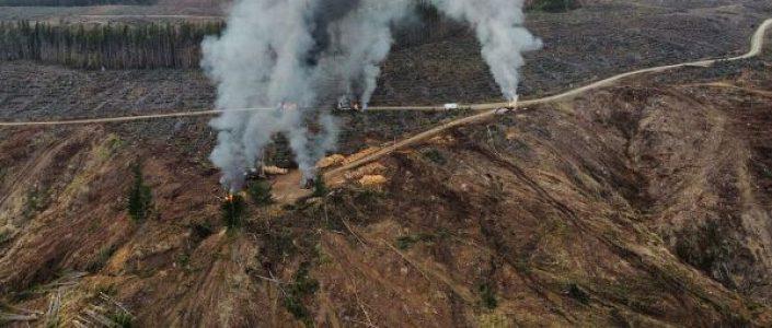 Nación Mapuche. Ataque incendiario de sabotaje a maquinaria forestal se produjo esta mañana en Lebu
