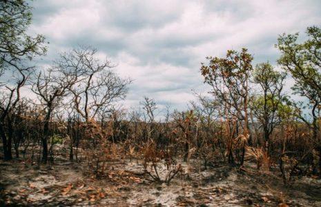 Ecología Social. Empresas y bancos europeos participan en la destrucción de bosques y sabanas de Brasil