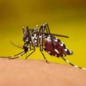 Argentina. Dengue: ya se suman más de 1700 casos en todo el país