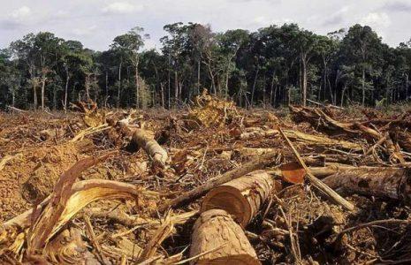 Argentina. Desmonte sin cuarentena: se perdieron 6500 hectáreas de bosques