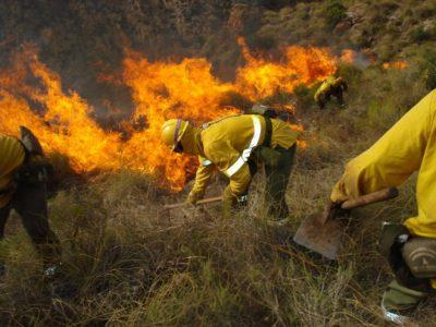 Bomberos forestales del SAT rechazan despido de trabajadores temporales
