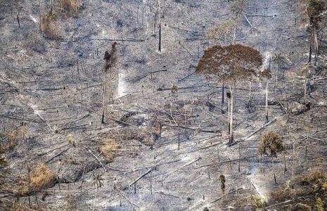 Brasil. La deforestación en la Amazonía crece 63.7% en abril: