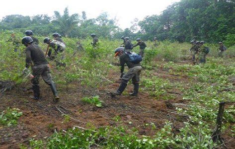 Colombia. Catatumbo necesita un acuerdo humanitario, no erradicación forzada