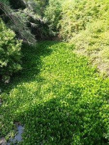 Ecologistas denuncian la aparición de una planta invasora en el Parque Natural de Los Alcornocales – La otra Andalucía