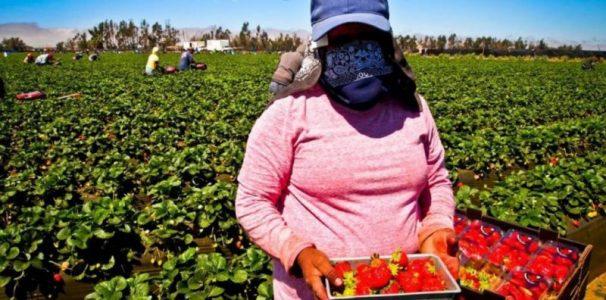Huelva: 14.000 trabajadoras contratadas en origen trabajarán en la campaña de la fresa