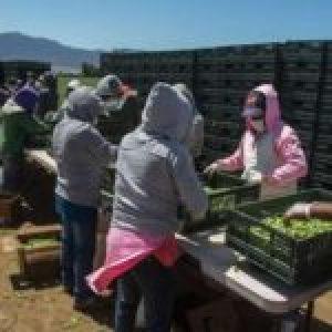 México. Mujeres del campo se sumarán a acciones del 8 y 9 de marzo