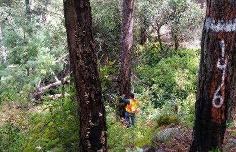 México. Comunidades forestales piden un salvavidas al Estado para no