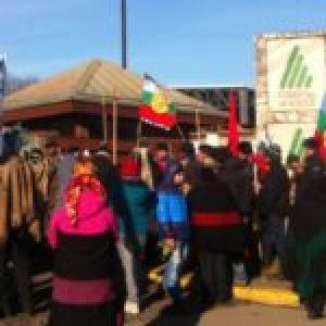 Nación Mapuche. Denuncian a empresas forestales