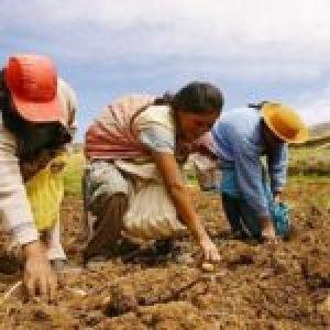Perú. Invierten un vergonzoso 0,7 del presupuesto público en agricultura