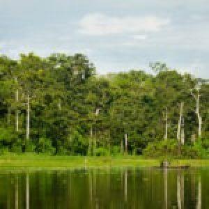 Perú. La pandemia nos enseña que debemos respetar los bosques y su biodiversidad
