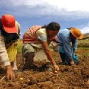 Perú. Nuestra agricultura familiar en tiempos del coronavirus