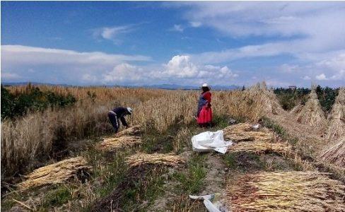 Perú. Comunidades andinas y autogestión en tiempos de pandemia