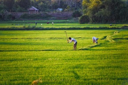 Vietnam: Primer ministro Xuan Phuc destaca las cooperativas como clave para el desarrollo